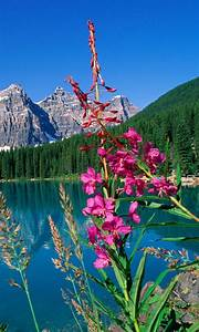 Free, Best, Nature, Views, Ever, Wallpaper, Apk, Download, For
