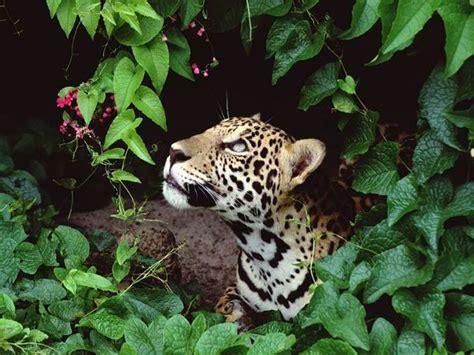 Tropical Rainforest Plants And Animals  Amazon Rainforest  Pinterest  Rainforest Animals And