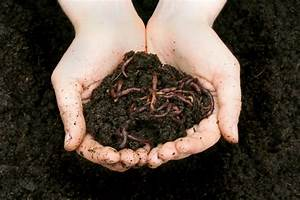 Compost 911: What are the right worms for vermicomposting ...