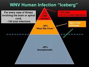 Wnv Human Infection  U201ciceberg U201d For