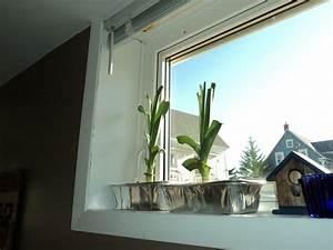 Aussaat Auf Der Fensterbank : lauch anbauen aussaat pflege und erntezeit plantura ~ Whattoseeinmadrid.com Haus und Dekorationen