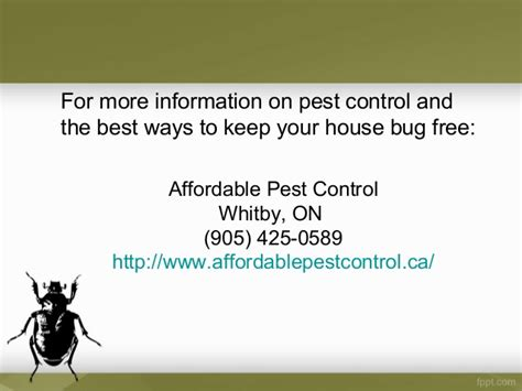 How To Protect Yourself Against Insect Infestation And. Creating An Online Business Burn Thigh Fat. Best Mba Internship Programs. Mapa De Hoteles En Cancun Micro Business Loan. Westdale Dental Cedar Rapids. Building A Database In Access. How Much Does Insurance Cost For A Car. Retirement Planning Software Reviews 2012. Dating Services Los Angeles Dr Brody Dentist
