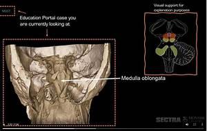 Anatomy Videos  U2013 Education Portal  U2013 Content Guide