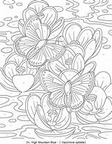 Coloring Adults Numbers Adult Printable Butterflies Butterfly Colouring Dover Advanced Haven Creative Amazing Papillon Paint Sheets Mariposas Wings Stress Flowers sketch template