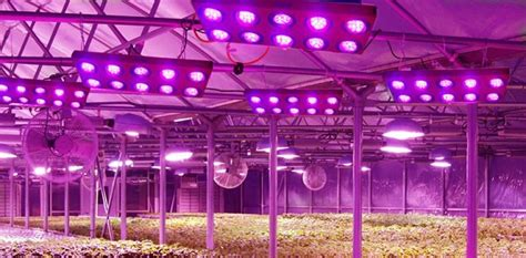 led lights for growing plants world largest led plant grow factory built in japan