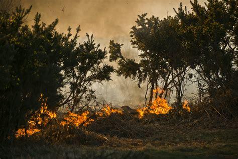 wildfires destroy winnie  poohs  acre wood