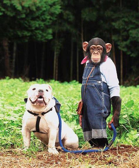 monkeying  images  pinterest monkeys