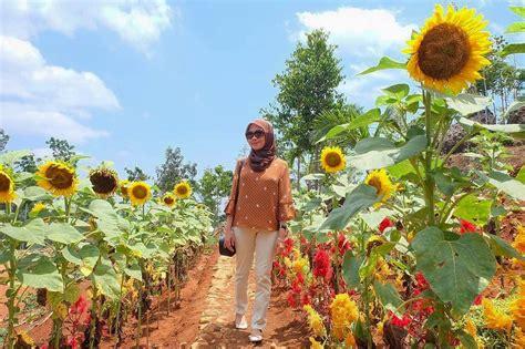 lokasi  harga tiket masuk kebun bunga matahari bantul