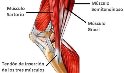 fisioterapia cranium  es la pata de ganso causas