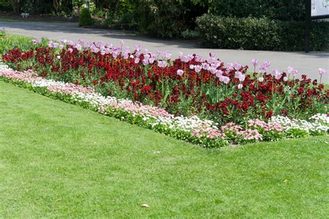 how to create borders with flowers and other plants