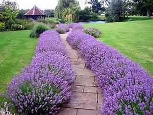 Blumen Für Garten : lila blumen f r den garten lassen sie sich vom feng shui garten inspirieren nowaday garden ~ Frokenaadalensverden.com Haus und Dekorationen