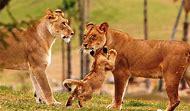 Wildlife Safari Animals