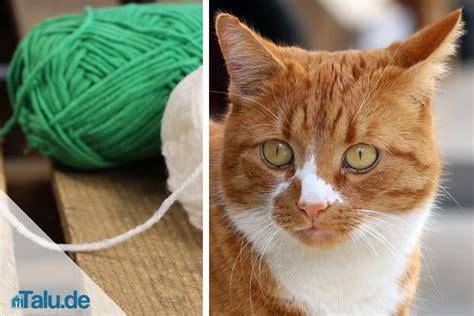 katzenspielzeug selbst gemacht katzenspielzeug selber machen schnelle ideen zum basteln talu de