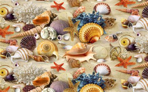 Seashell, Coral, Starfish, Sand Wallpaper  Hd Wallpaper