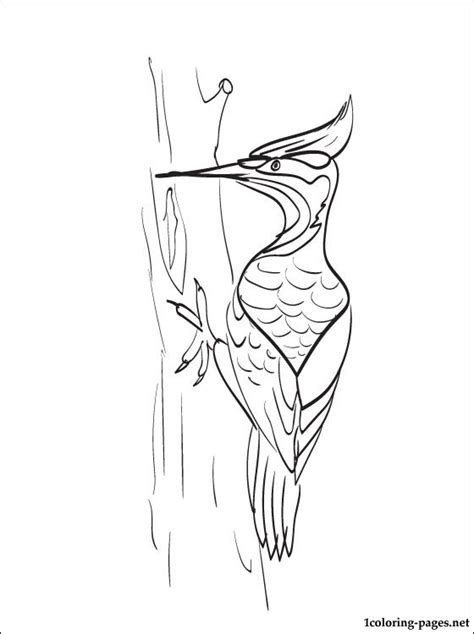 woodpecker coloring page   coloring pages