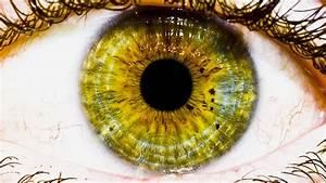 Fondos, De, Pantalla, Cara, Ojos, Naturaleza, Ojos, Verdes
