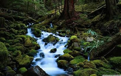 Stream Wallpapers Desktop Forest