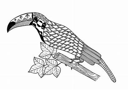 Toucan Coloring Pages Adult