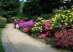 Hang Bepflanzen Bodendecker : geh lze f r die hangbepflanzung ~ Lizthompson.info Haus und Dekorationen