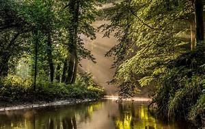 Nature, Landscape, Sun, Rays, River, Forest, Mist, Water, Reflection, Netherlands, Trees, Shrubs