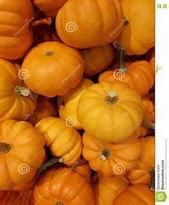 Mini, Pumpkins, Stock, Photo, Image, Of, Halloween, Thanksgiving