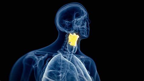 Sinus Pressure Pain Treatment. 3d Animated X-ray Human