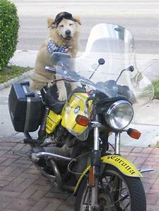 1000+ images about Dogs Riding Motorcycles on Pinterest