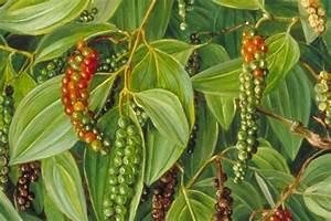 5 Edible Plants Containing Cannabinoids | Medicinal Foods