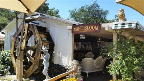 garden cafe fallbrook ca myrtle berry pie berry lemonade flower arrangement picture of myrtle creek botanical