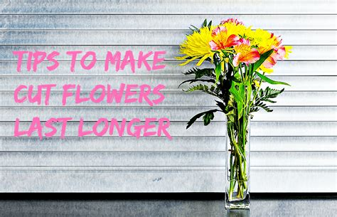 Make Cut Flowers Last Longer by Flower Floral Ideas And Arrangements Avas Flowers