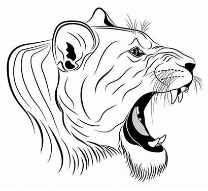 Lion Lioness Tattoo Coloring Head Vector Clipart