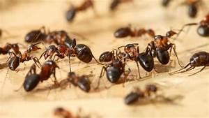 Ameisenplage Im Haus : ameisen in der wohnung ein grund zur mietminderung wohnen ~ Orissabook.com Haus und Dekorationen