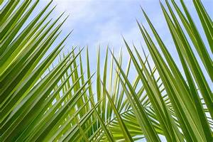 Season of Sundays: April 9, 2017 - Palm Sunday of the Lord ...