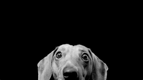 iphonedog wallpapers  images tablet  wallpaper