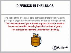 Lesson 2  Lung Volumespptx