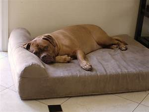 Top 5 dog beds for large dog breeds o petpampa for Big dog furniture