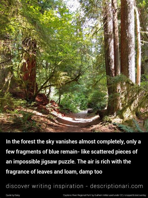forest quotes  descriptions  inspire creative