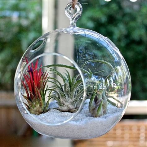 MyGift 2 Clear Glass Hanging 4.5 Inch Round Ball Air Plant