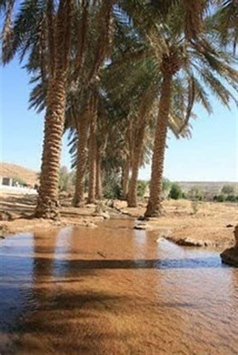 abbys blog arabian desert oasis