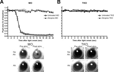 Pone 0015009 G003dissecting A Role For Melanopsin In