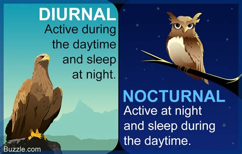 nocturnal diurnal animals plants difference between birds