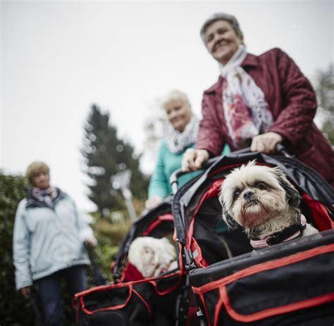 Haustiere Werden In Deutschland Mit Luxus Verwöhnt Welt
