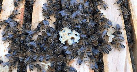 wespen im winter was machen eigentlich bienen im winter stadtwerke solingen
