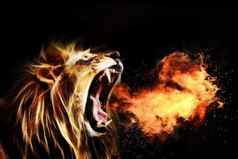 fire lion wallpapers wallpapertag