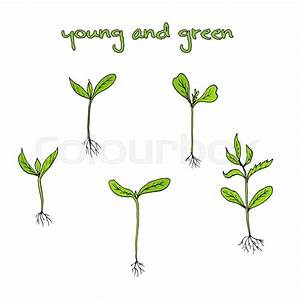 Sprouts Plants  Hand Drawn Botanical