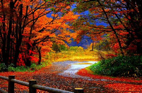 Autumn Windows Xp Wallpapers by Windows Xp Autumn Wallpaper Zoom Wallpapers
