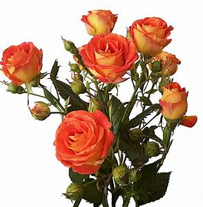 Bunch of roses. PNG. by OlgaCherkasova on DeviantArt
