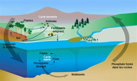 Phosphoru Cycle Diagram Pdf by Phosphorus And Eutrophication Encyclop 233 Die De L