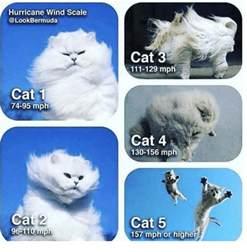 cat scale me 25 best memes about cat 5 cat 5 memes