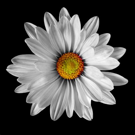 artful flowers photo collection art photo web studio